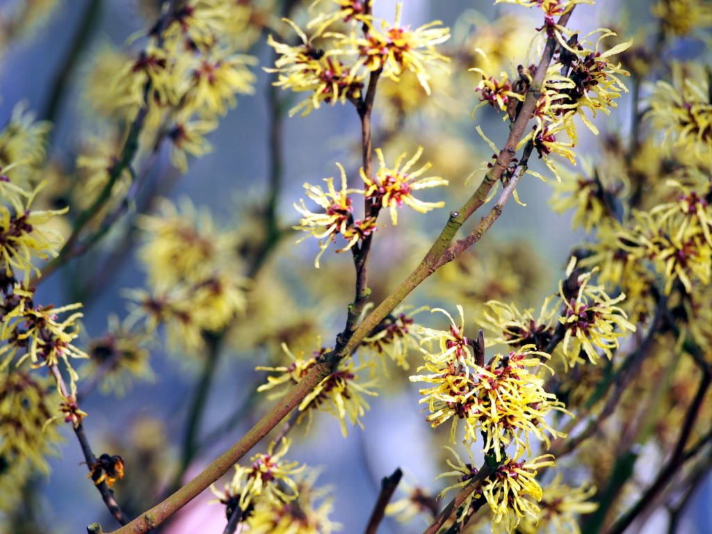 Easy Care Garden Plants 10, Best Garden, Home And DIY Tips
