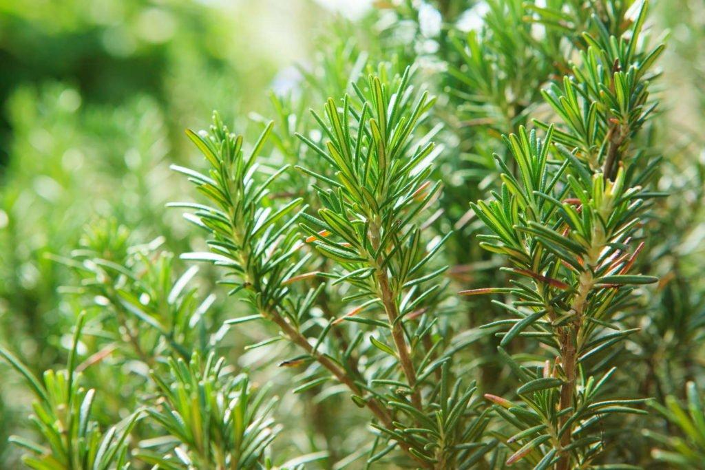 Easy Care Garden Plants 2, Best Garden, Home And DIY Tips