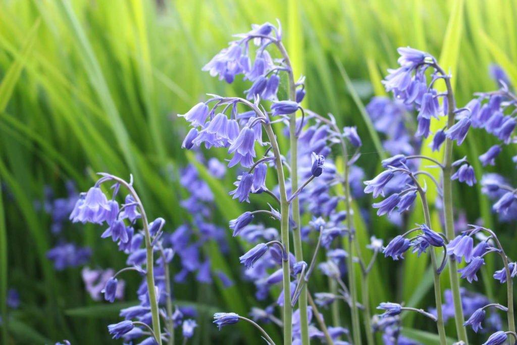 Easy Care Garden Plants 4, Best Garden, Home And DIY Tips