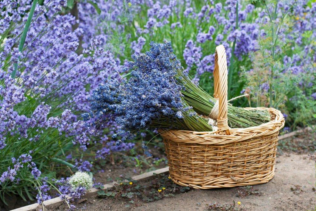 Easy Care Garden Plants 5, Best Garden, Home And DIY Tips