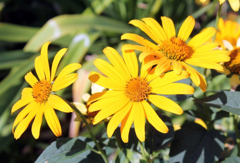Easy Care Garden Plants 6, Best Garden, Home And DIY Tips