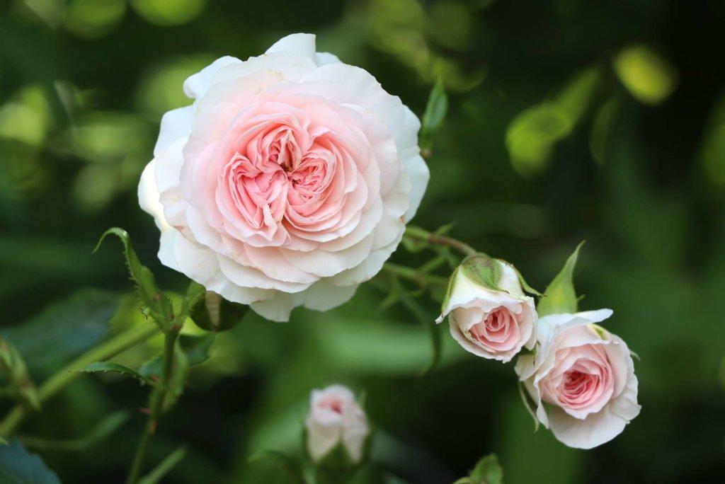 Easy Care Garden Plants 7, Best Garden, Home And DIY Tips
