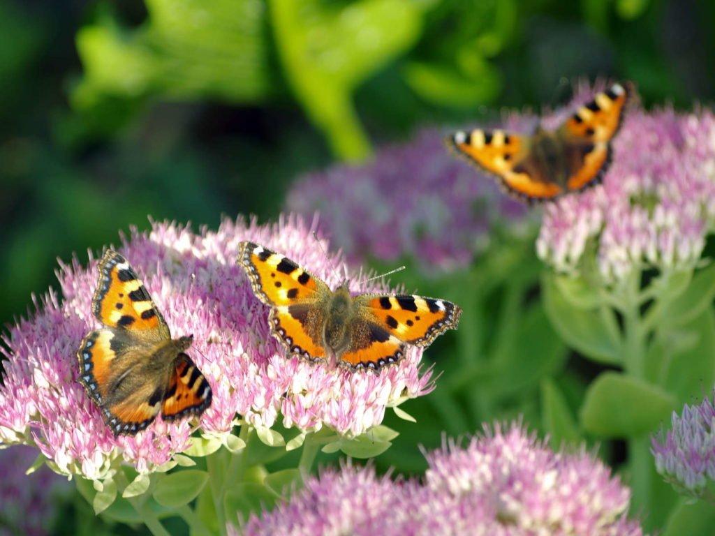 Easy Care Garden Plants 8, Best Garden, Home And DIY Tips