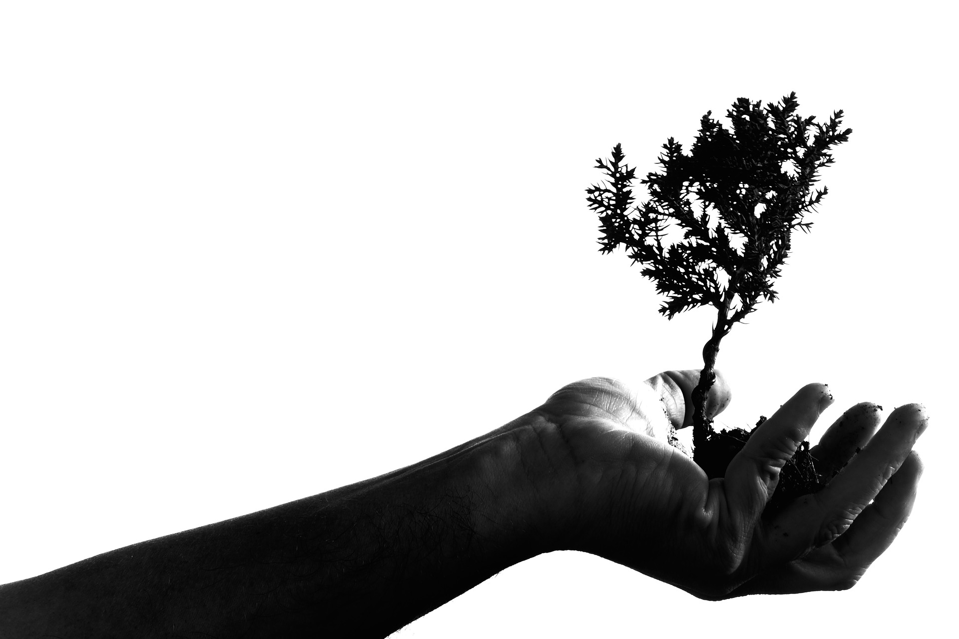 Read more about the article PLANTING TREE: THIS IS THE RIGHT THING