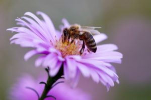 , How can you help bees? Tips to save the bees, Best Garden, Home And DIY Tips
