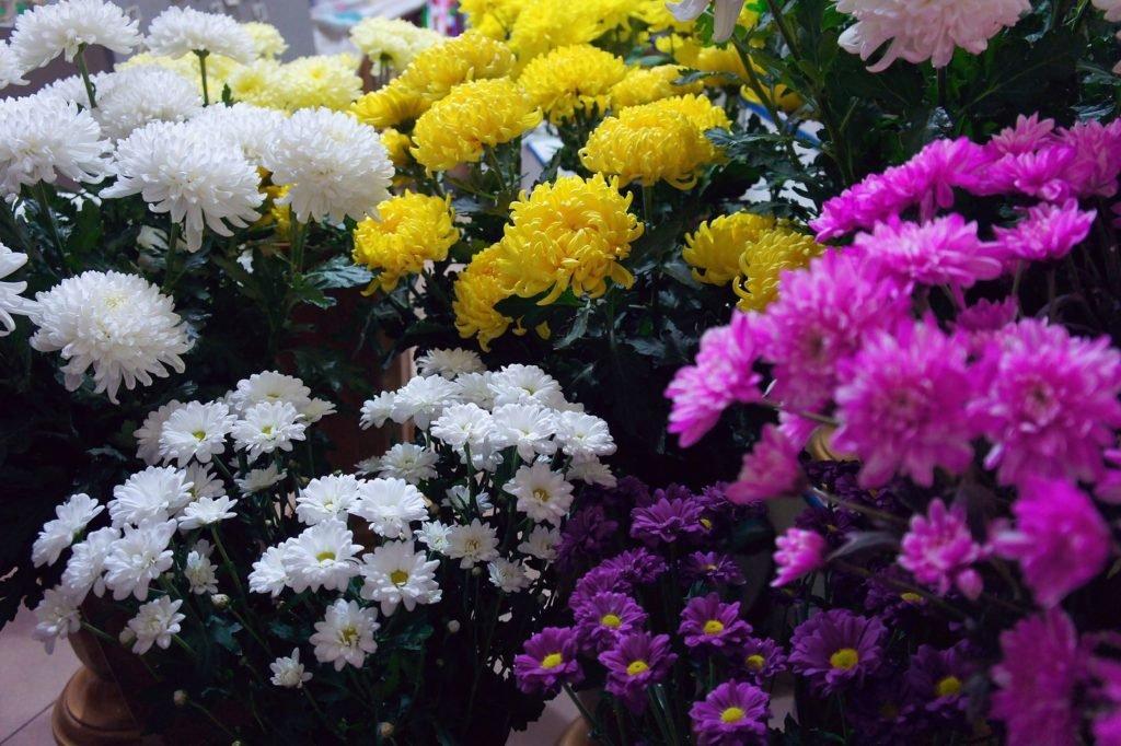 Bees Dislike 1, Best Garden, Home And DIY Tips
