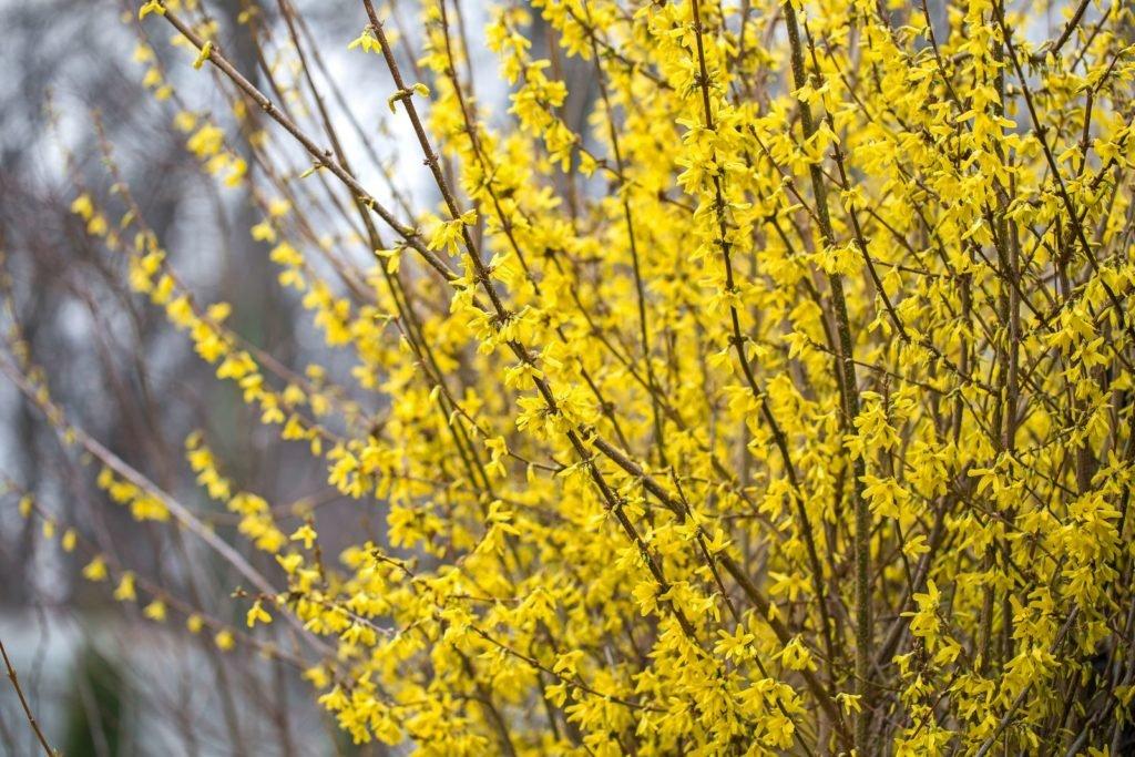 Bees Dislike 10, Best Garden, Home And DIY Tips