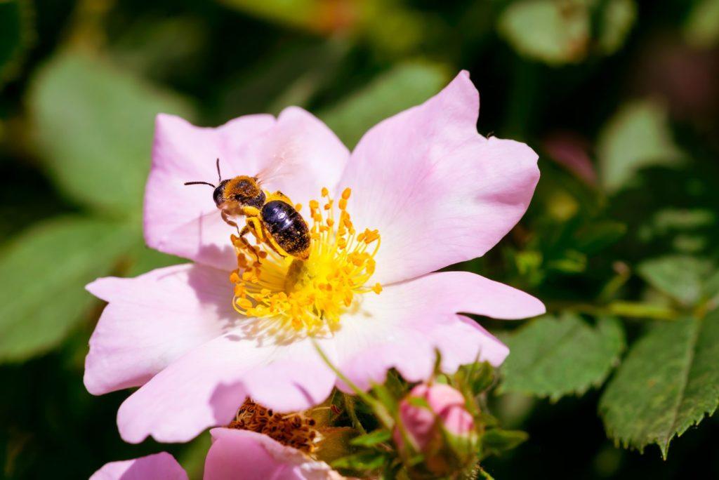 Bees Dislike 2, Best Garden, Home And DIY Tips