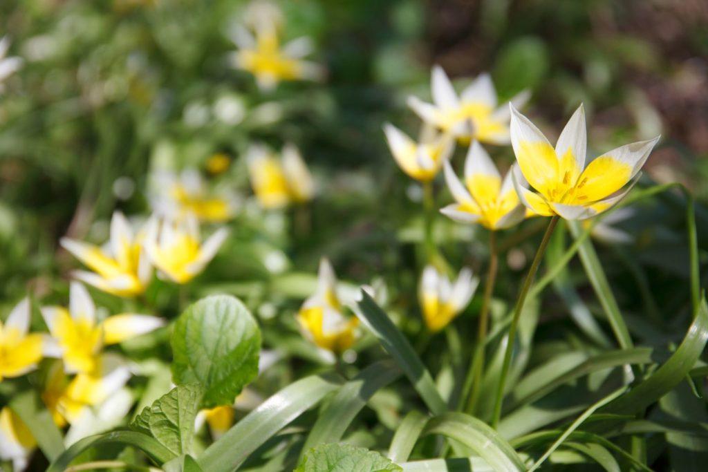 Bees Dislike 3, Best Garden, Home And DIY Tips