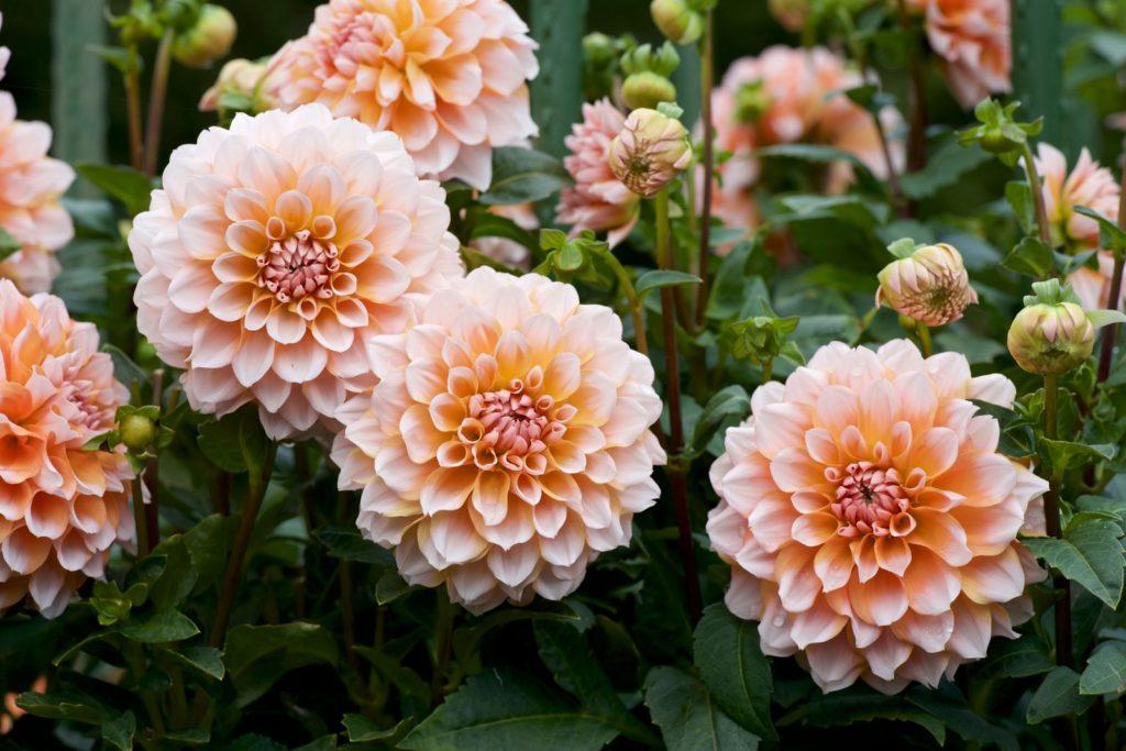 Bees Dislike 4, Best Garden, Home And DIY Tips