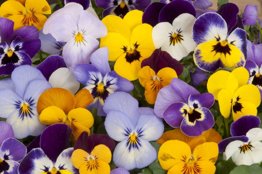 Bees Dislike 5, Best Garden, Home And DIY Tips