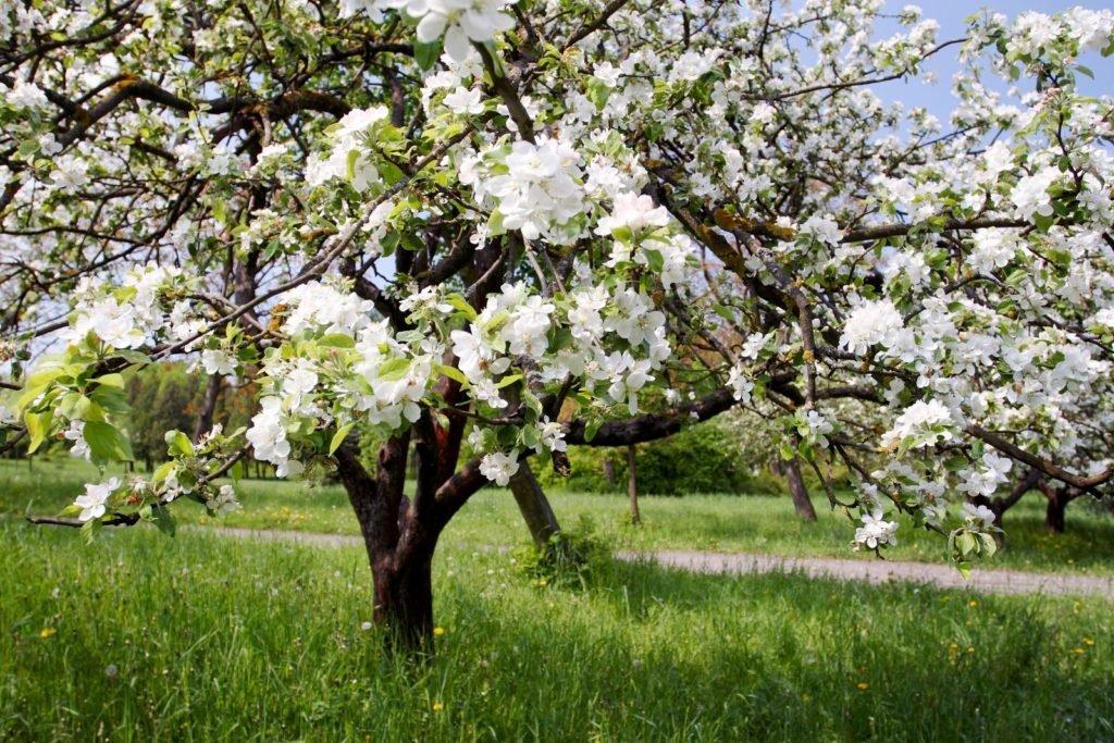 Bees Dislike 8, Best Garden, Home And DIY Tips