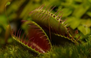 , Carnivorous plants, carnivores, Best Garden, Home And DIY Tips