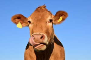 , This is what you should do when you encounter cows, Best Garden, Home And DIY Tips