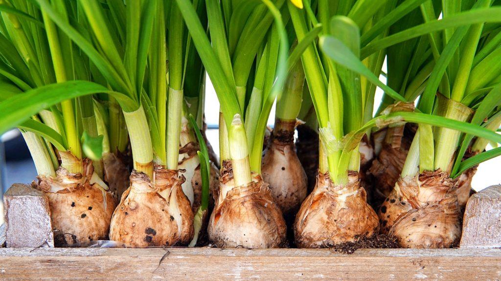 Flower Bulb 4073133 1920 1024x575, Best Garden, Home And DIY Tips