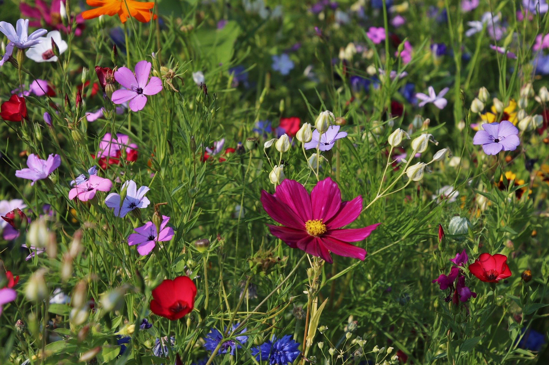 , Easy-care garden plants: the top 10 for outdoors, Best Garden, Home And DIY Tips