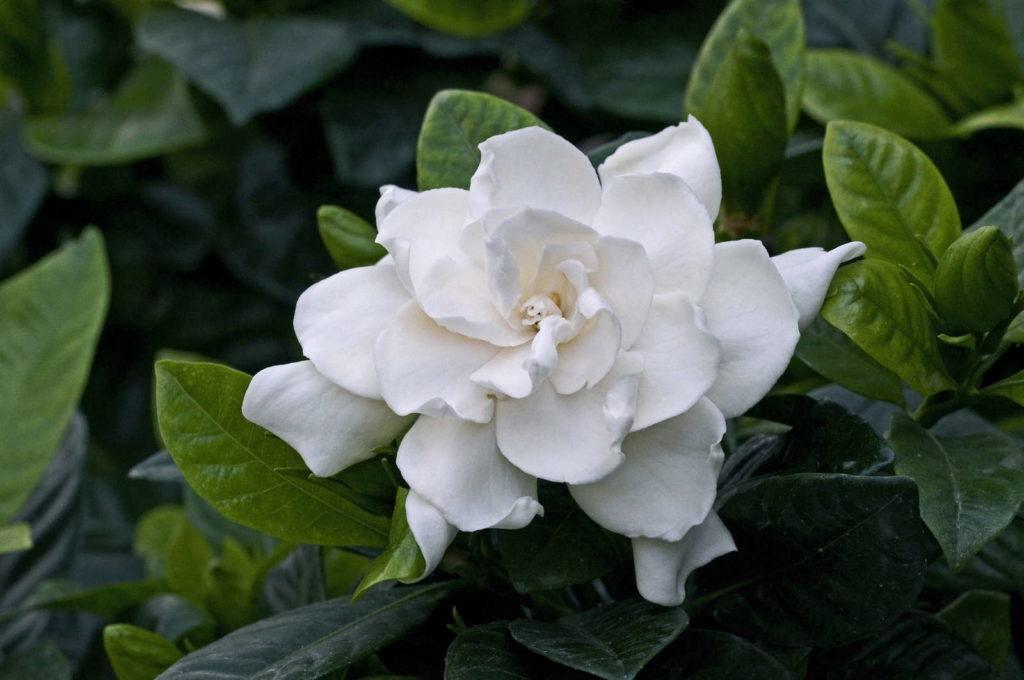 Fragrant Plants 10, Best Garden, Home And DIY Tips