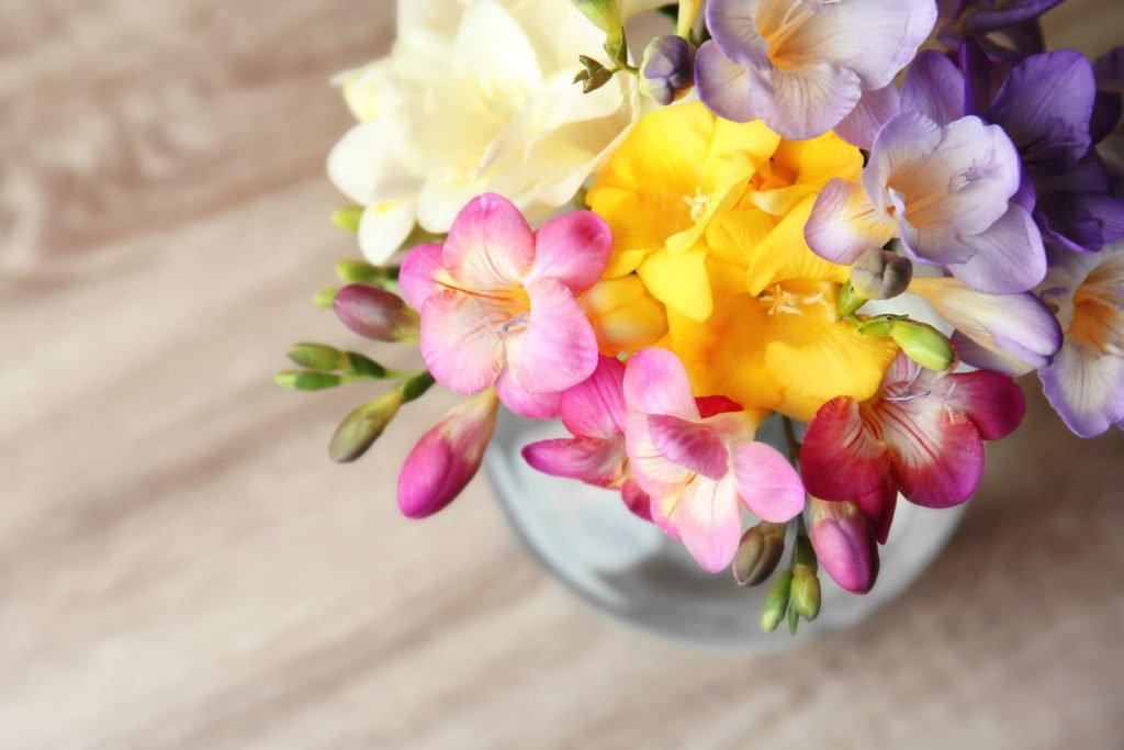 Fragrant Plants 2, Best Garden, Home And DIY Tips