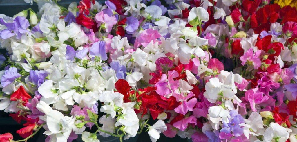 Fragrant Plants 4, Best Garden, Home And DIY Tips