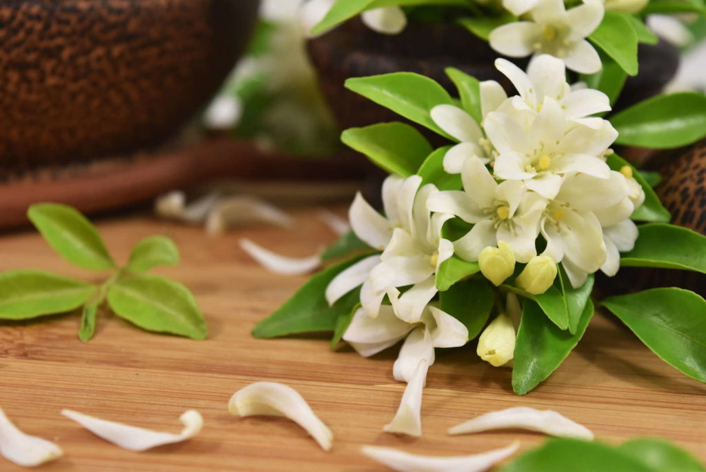 Fragrant Plants 7, Best Garden, Home And DIY Tips