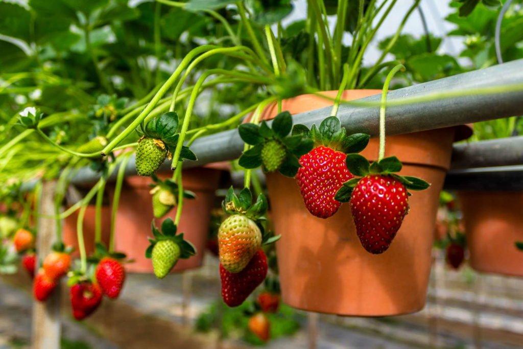 Fruits 1, Best Garden, Home And DIY Tips