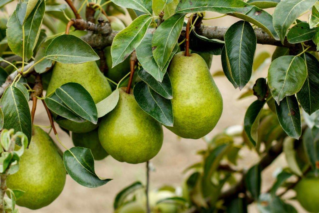 Fruits 3, Best Garden, Home And DIY Tips