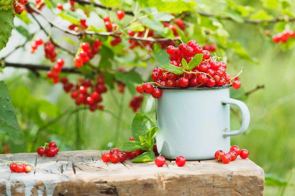 Fruits 4, Best Garden, Home And DIY Tips