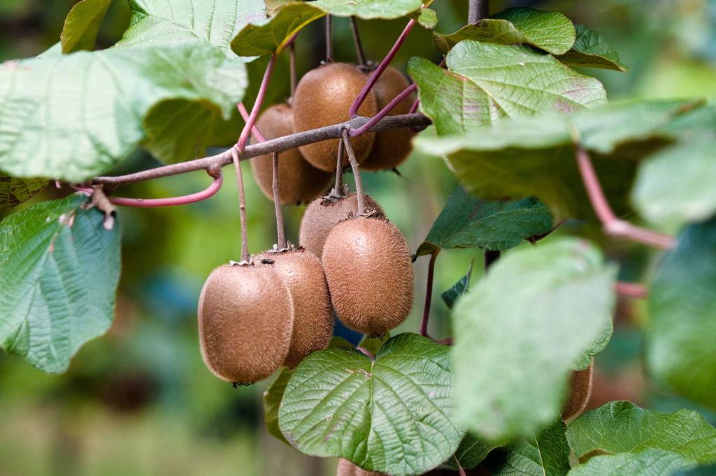 Fruits 5, Best Garden, Home And DIY Tips