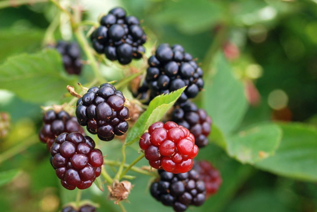 Fruits 6, Best Garden, Home And DIY Tips