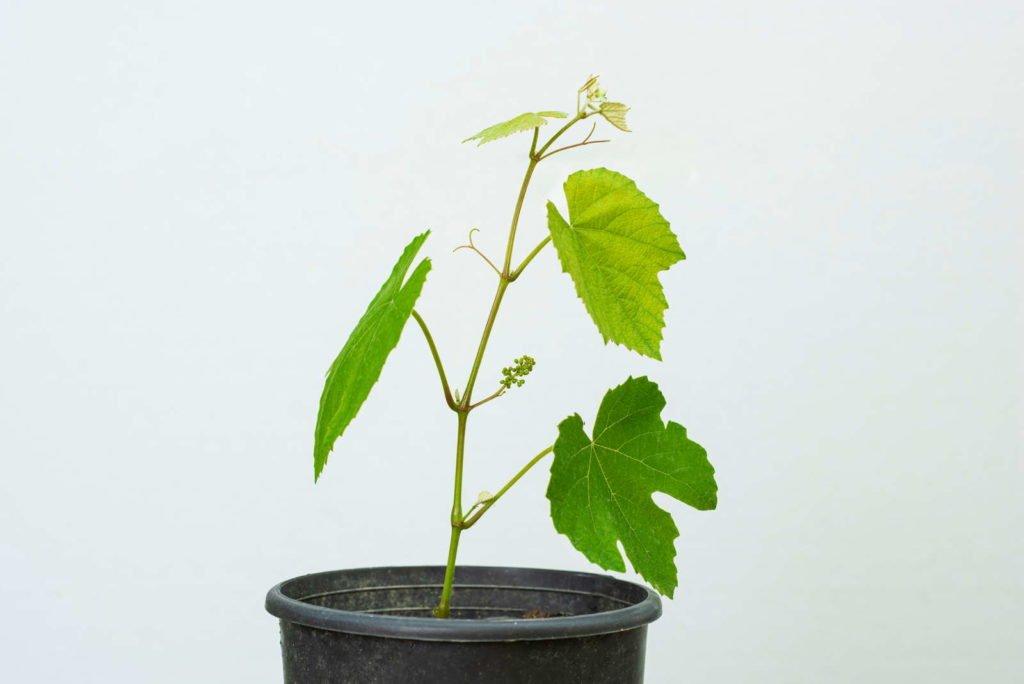 Fruits 7, Best Garden, Home And DIY Tips