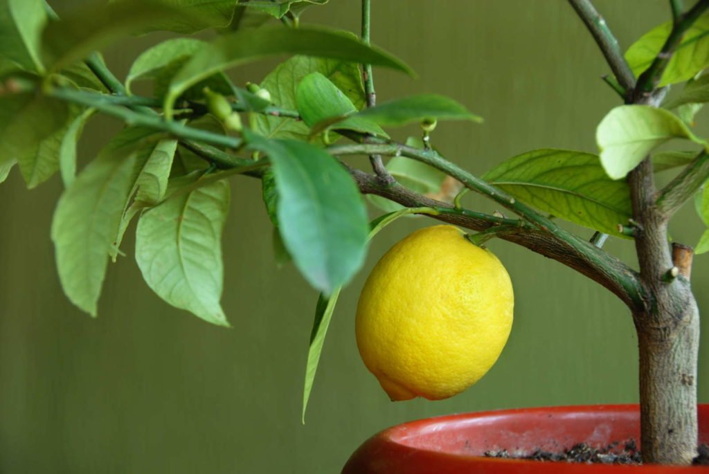 Fruits 8, Best Garden, Home And DIY Tips