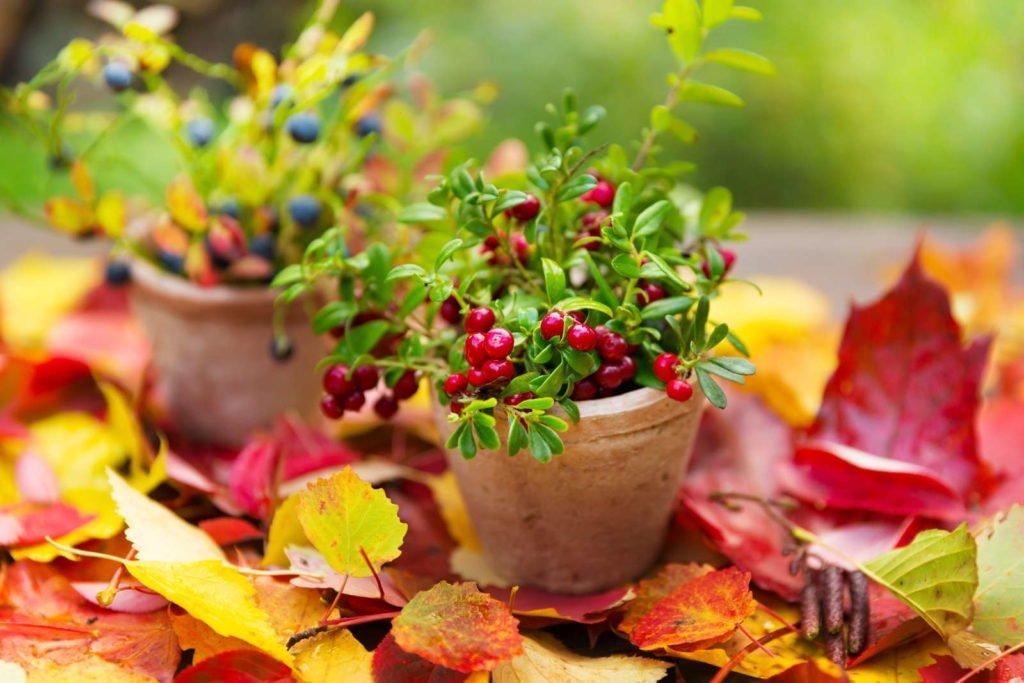 Fruits 9, Best Garden, Home And DIY Tips