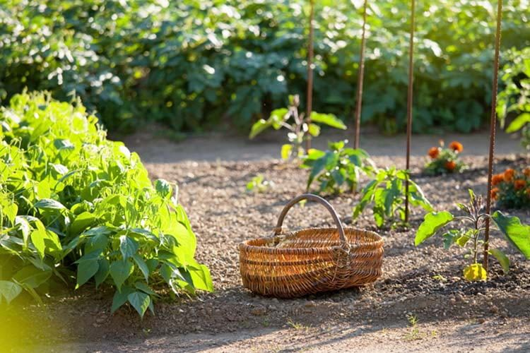 Garden Watering, Best Garden, Home And DIY Tips