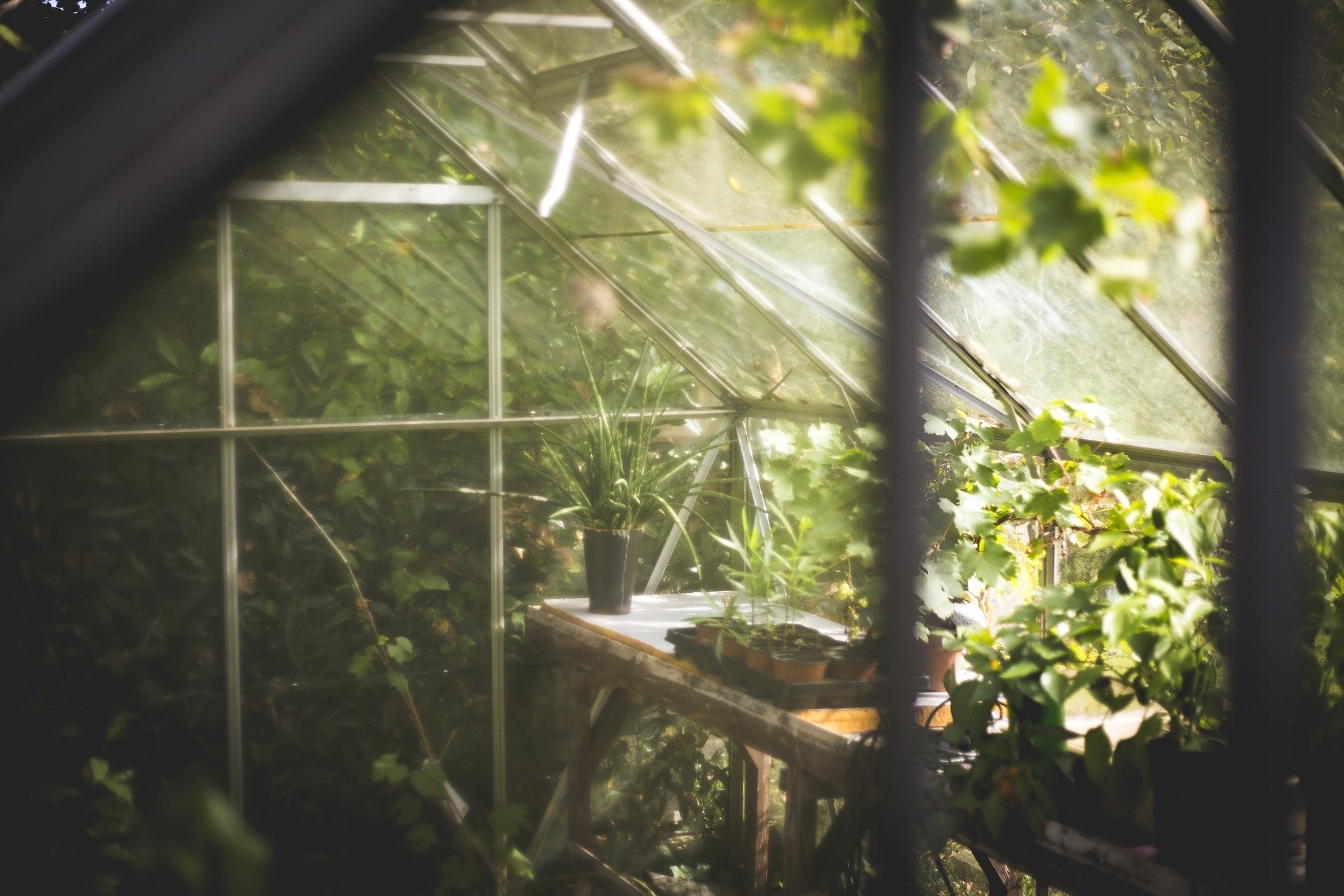 , Only the best for the tomato greenhouse!, Best Garden, Home And DIY Tips