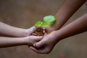 , How Plant Grow, Best Garden, Home And DIY Tips