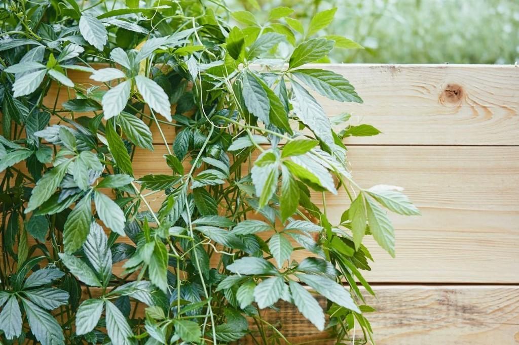 Herbs 1, Best Garden, Home And DIY Tips