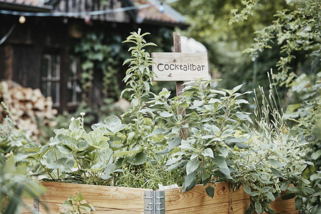 Herbs 2, Best Garden, Home And DIY Tips