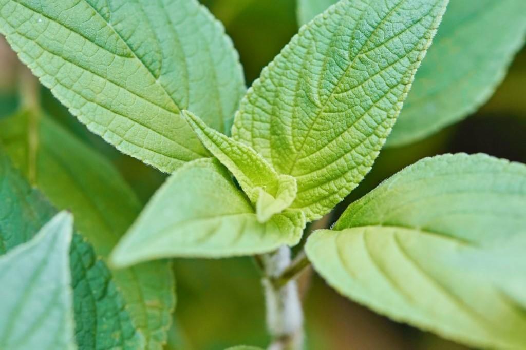 Herbs 3, Best Garden, Home And DIY Tips