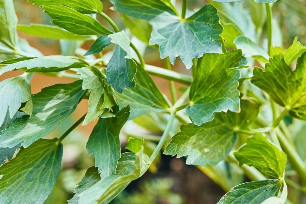 Herbs 4, Best Garden, Home And DIY Tips