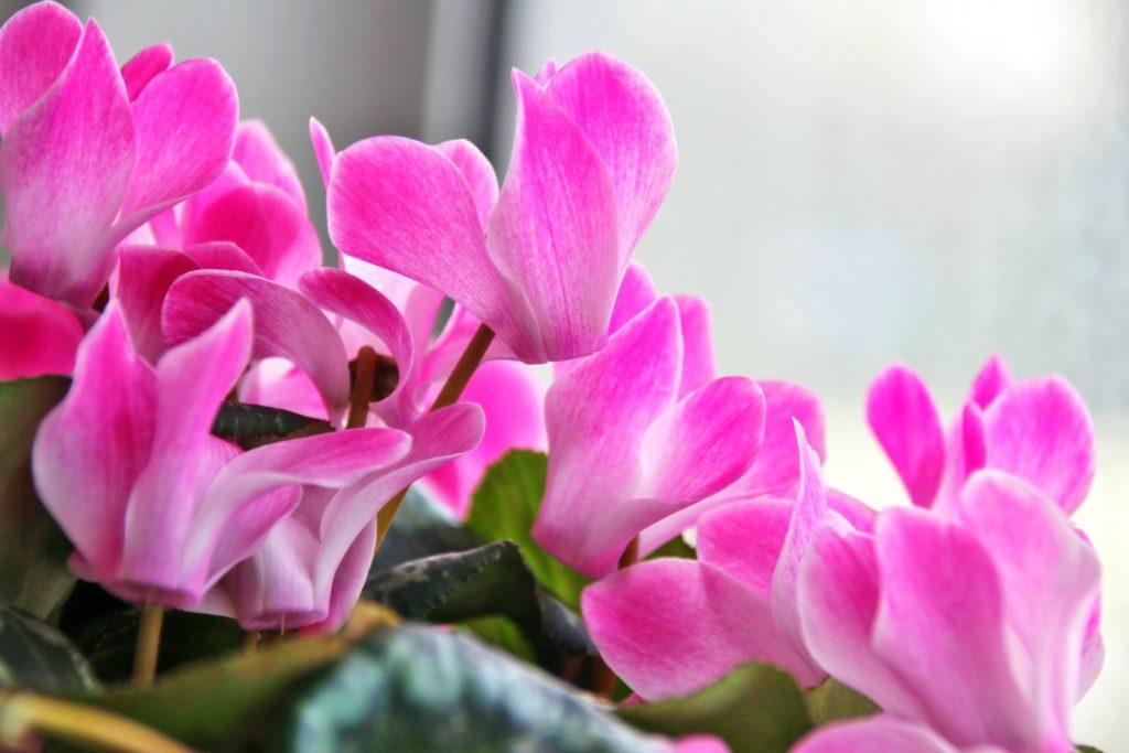 Houseplants 1, Best Garden, Home And DIY Tips