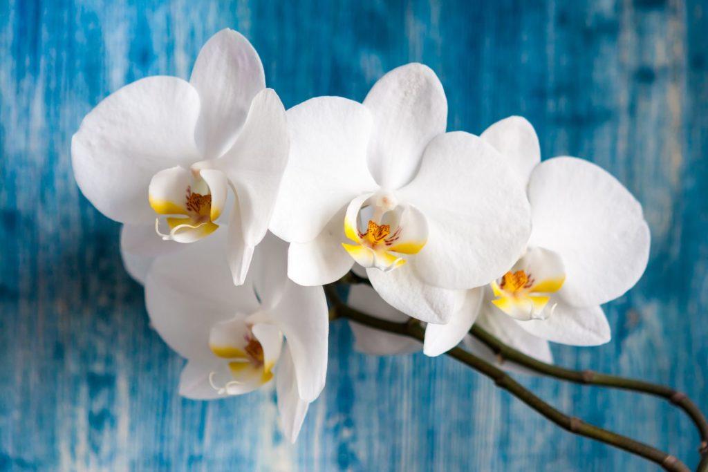 Houseplants 10, Best Garden, Home And DIY Tips