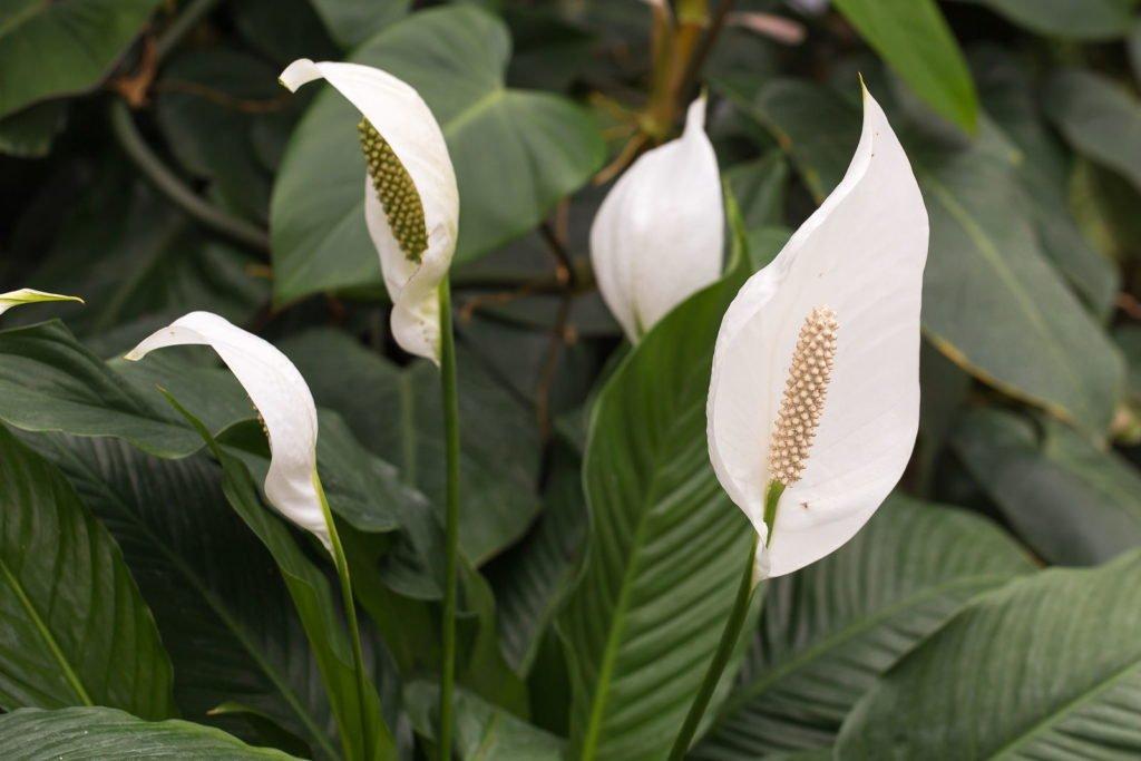 Houseplants 3, Best Garden, Home And DIY Tips