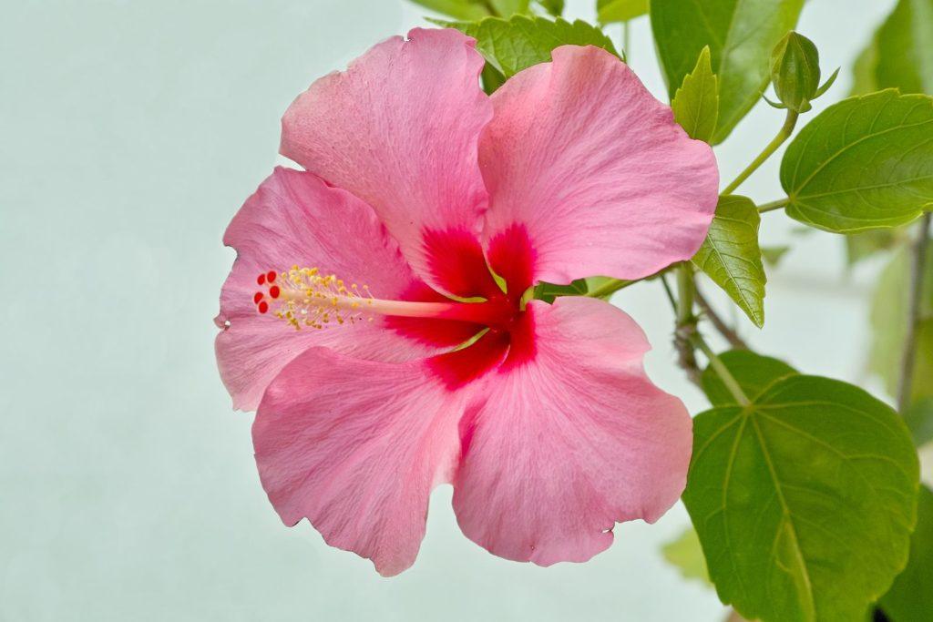Houseplants 5, Best Garden, Home And DIY Tips