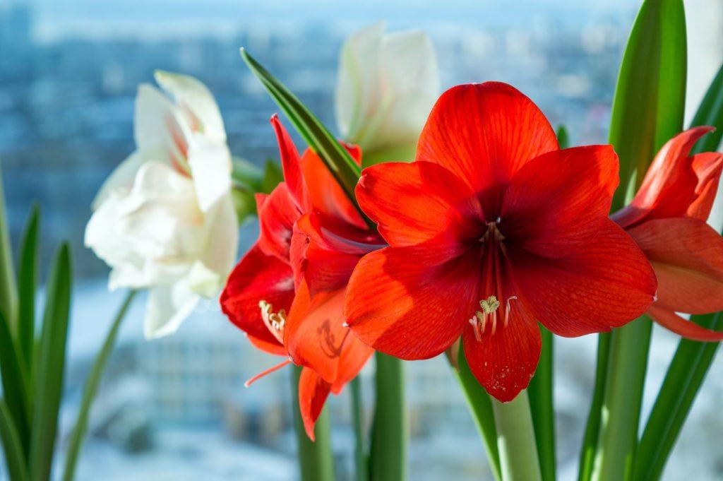 Houseplants 6, Best Garden, Home And DIY Tips