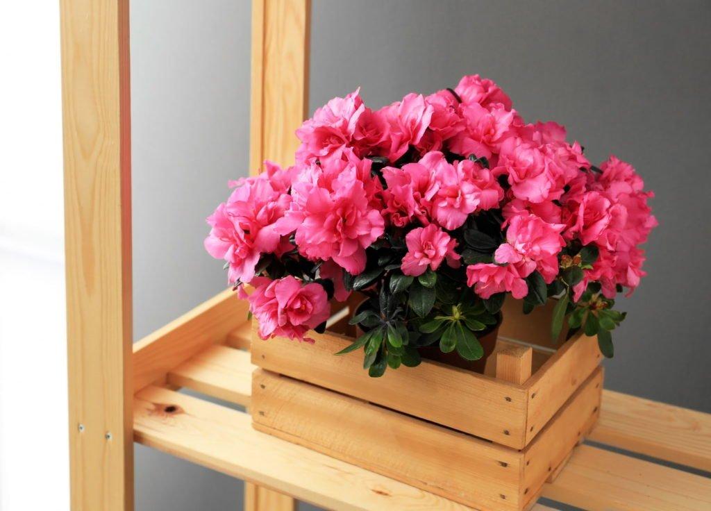 Houseplants 7, Best Garden, Home And DIY Tips