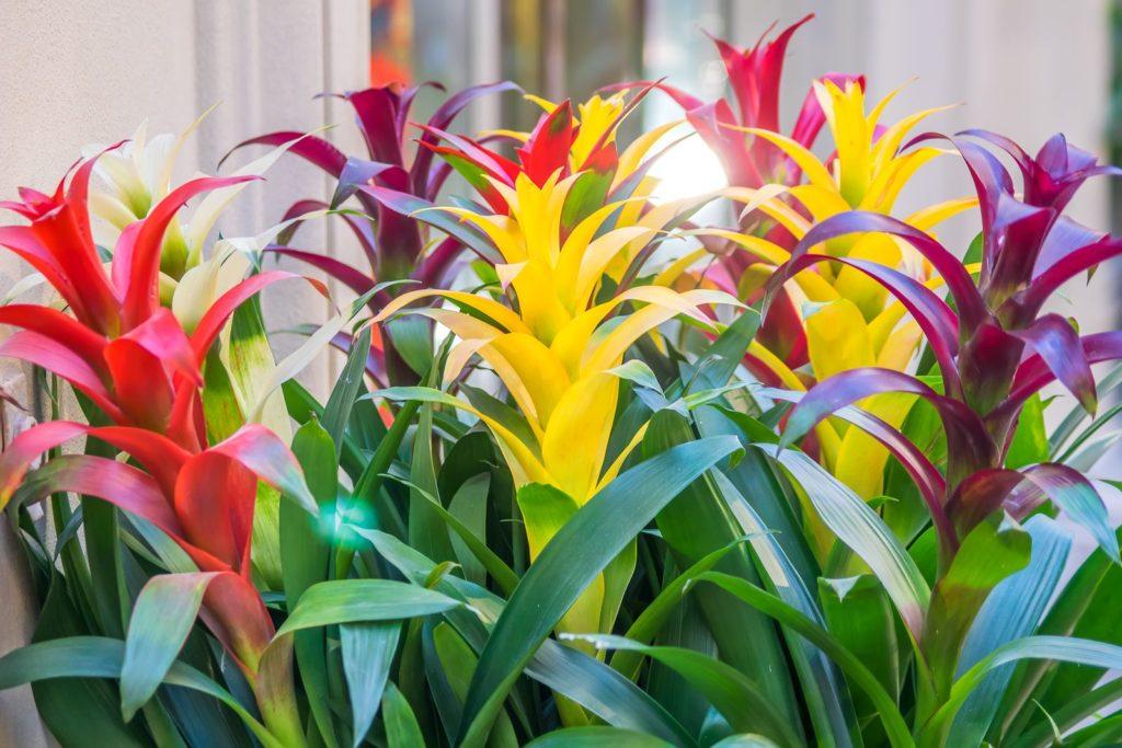 Houseplants 8, Best Garden, Home And DIY Tips