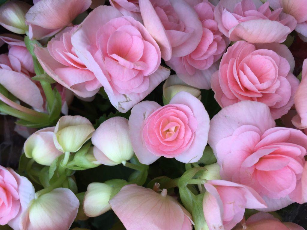 Houseplants 9, Best Garden, Home And DIY Tips