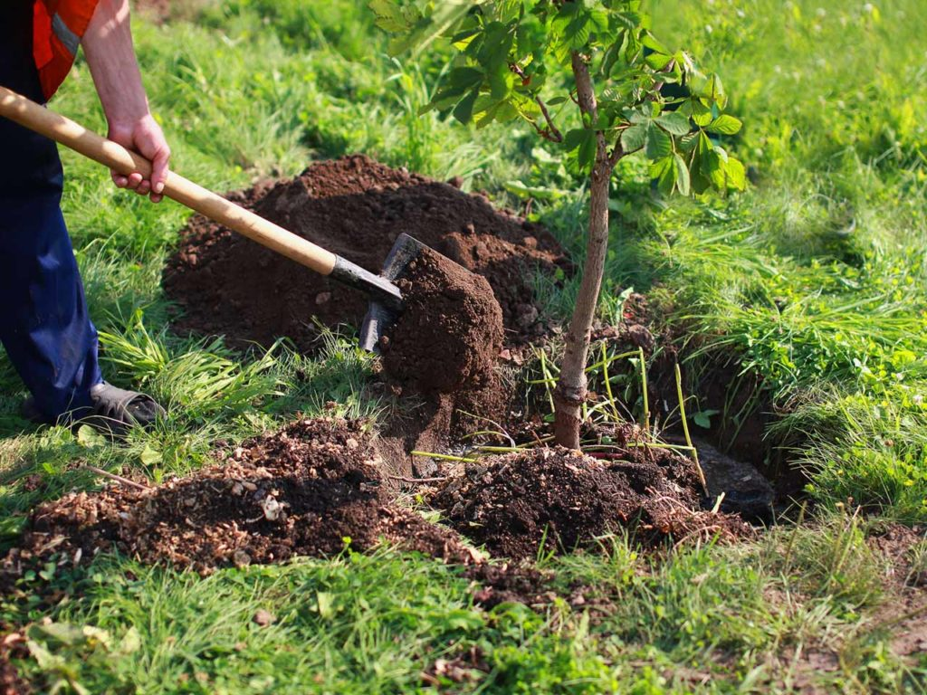 How To Plant A Tree 1024x768, Best Garden, Home And DIY Tips