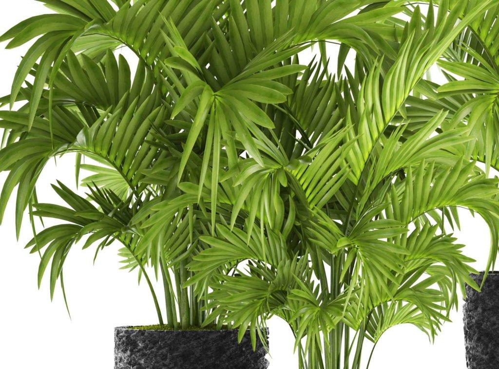 Indoor Plants 1, Best Garden, Home And DIY Tips
