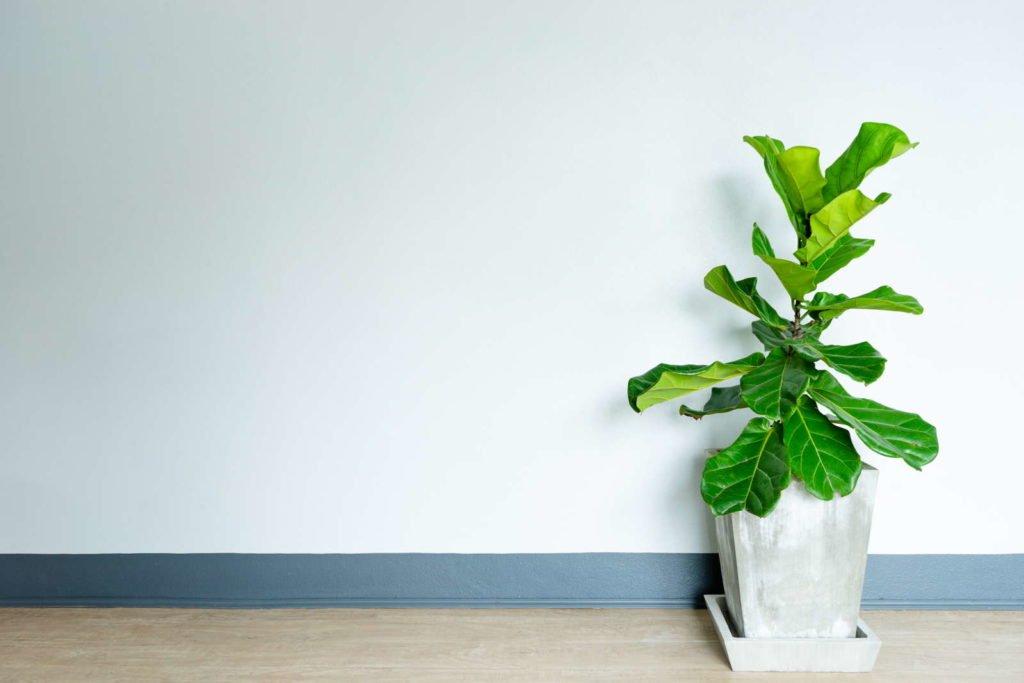 Indoor Plants 10, Best Garden, Home And DIY Tips